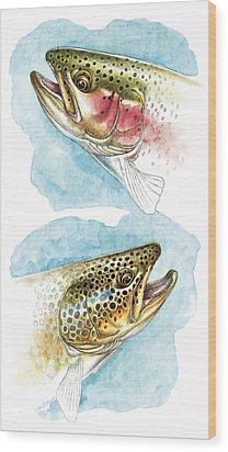 Trout Study Wood Print by JQ Licensing