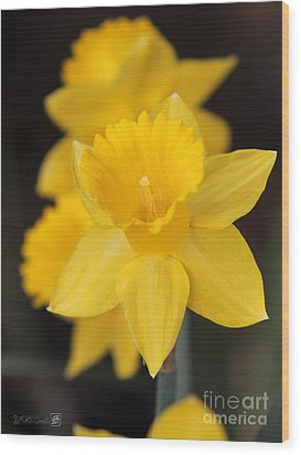 Trumpet Daffodil Named Exception Wood Print