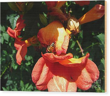 Trumpet Flower Orange And Visiting Bee Wood Print