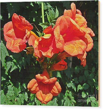 Trumpet Flower Orange Quartet Wood Print
