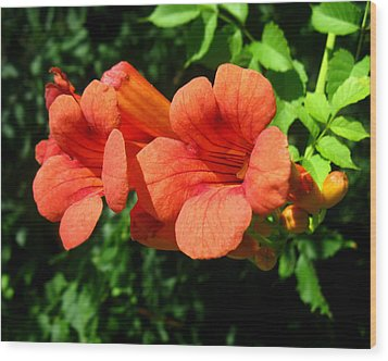 Wood Print featuring the photograph Wild Trumpet Vine by William Tanneberger