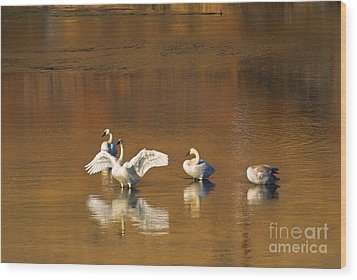 Trumpeter Ballet Wood Print by Mike  Dawson