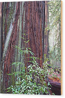 Trunk Of Coastal Redwood In Armstrong Redwoods State Preserve Near Guerneville-ca Wood Print by Ruth Hager