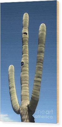 Tucson Arizona Cactus Wood Print by Gregory Dyer