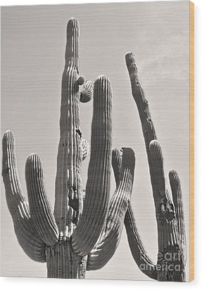 Tucson Arizona Sepia Catus Wood Print by Gregory Dyer