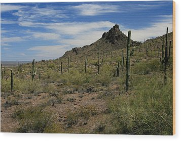 Tucson Catci Wood Print by Scott Cunningham