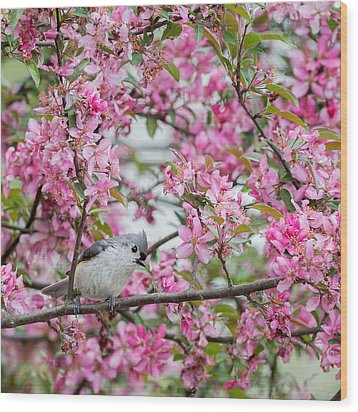 Tufted Titmouse In A Pear Tree Square Wood Print