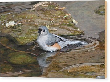 Tufted Titmouse In Pond Wood Print by Sandy Keeton