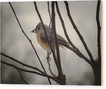 Tufted Titmouse Wood Print by Karen Wiles