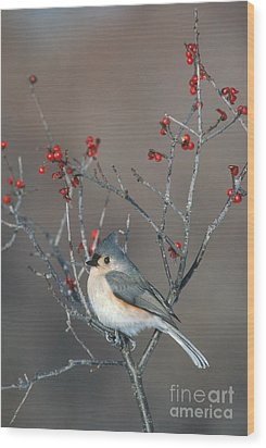Tufted Titmouse Wood Print by Larry West
