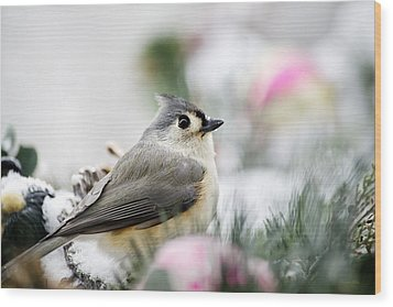 Tufted Titmouse Portrait Wood Print