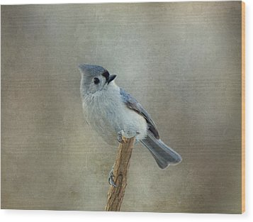 Tufted Titmouse Watching Wood Print