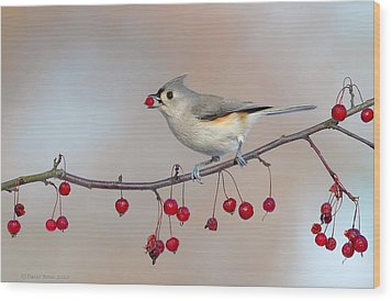 Tufted Titmouse With Red Berry Wood Print