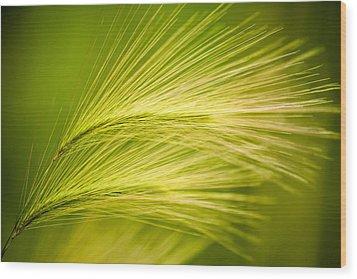 Tufts Of Ornamental Grass Wood Print by  Onyonet  Photo Studios