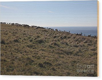 Tules Elks Of Tomales Bay California - 5d21276 Wood Print by Wingsdomain Art and Photography