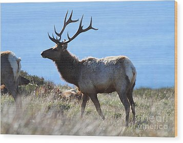 Tules Elks Of Tomales Bay California - 7d21218 Wood Print by Wingsdomain Art and Photography