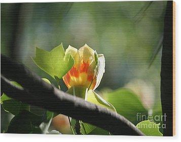Tulip 3 Wood Print