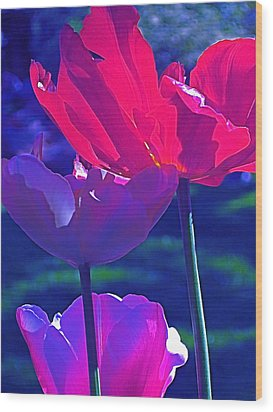 Wood Print featuring the photograph Tulip 3 by Pamela Cooper