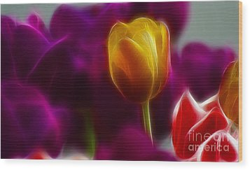 Tulip-6983 Wood Print by Gary Gingrich Galleries