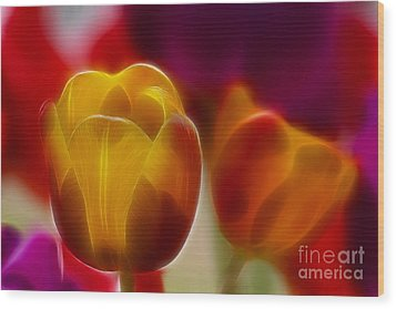 Tulip-7016-fractal Wood Print by Gary Gingrich Galleries