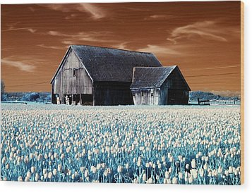 Tulip Barn Wood Print by Rebecca Parker