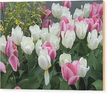 Purple And White Tulips Wood Print by Catherine Gagne