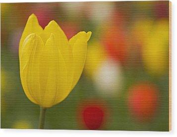 Tulip Bokeh Wood Print by Nick  Boren