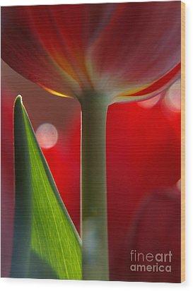 Tulip Bokeh Wood Print by Trena Mara