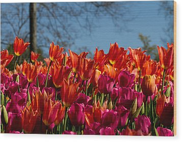 Tulip Chatter Wood Print