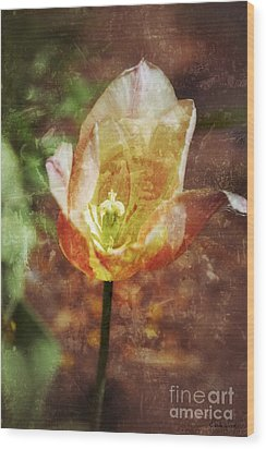 Wood Print featuring the photograph Tulip by Darla Wood