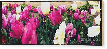 Wood Print featuring the photograph Tulip Delight by Leslie Hunziker