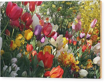Wood Print featuring the photograph Tulip Festival by Mary Lou Chmura
