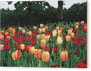Wood Print featuring the photograph Tulip Festival  by Zinvolle Art