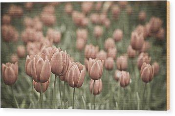 Tulip Field Wood Print by Frank Tschakert