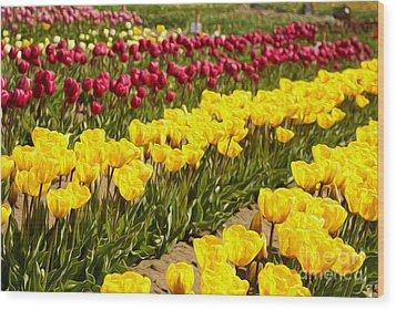Tulip Field Wood Print by Nur Roy