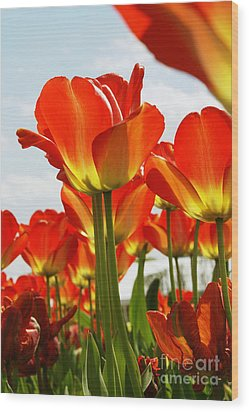 Wood Print featuring the photograph Tulip Field 1 by Rudi Prott
