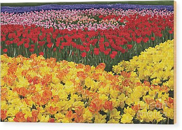 Wood Print featuring the digital art Tulip Field by Tim Gilliland