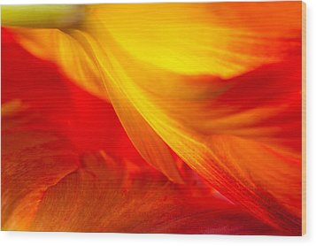 Tulip Flame Wood Print by Joan Herwig