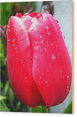 Wood Print featuring the photograph Tulip Flower Rain Drops by Colette V Hera  Guggenheim