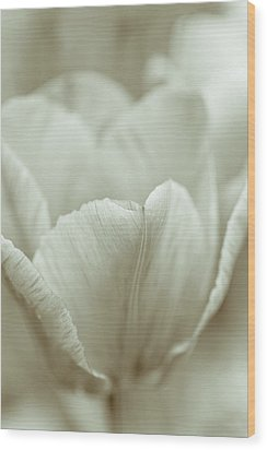 Tulip Wood Print by Frank Tschakert