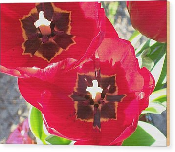 Wood Print featuring the photograph Tulip Harmony by Belinda Lee