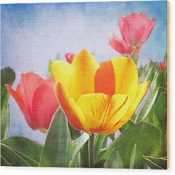Tulip Joy Wood Print by Deborah Smith