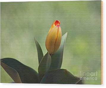 Wood Print featuring the photograph New Beginning by Lisa L Silva