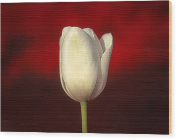 Wood Print featuring the photograph Tulip by Marion Johnson