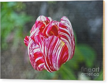 Tulip Wood Print by Nur Roy