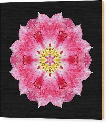 Tulip Peach Blossom IIi Flower Mandala Wood Print by David J Bookbinder