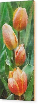 Tulip Quartet Wood Print by Francesa Miller
