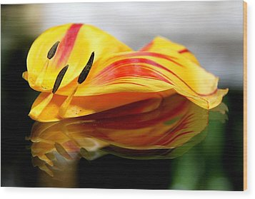 Tulip Reassembled Wood Print by  Andrea Lazar