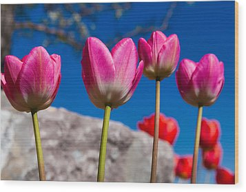 Tulip Revival Wood Print by Chad Dutson