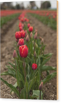 Wood Print featuring the photograph Tulip Row by Erin Kohlenberg